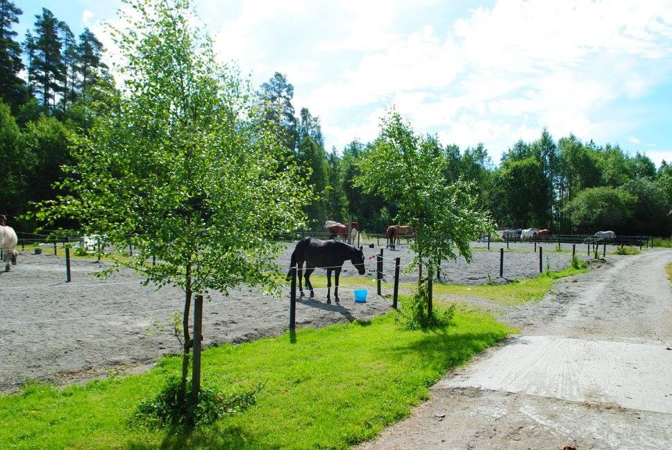 Rideskole-Moss-Son-Rakkestad-Askim-Mysen